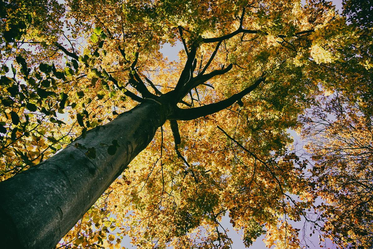 Herbstlichter - Baumfoto