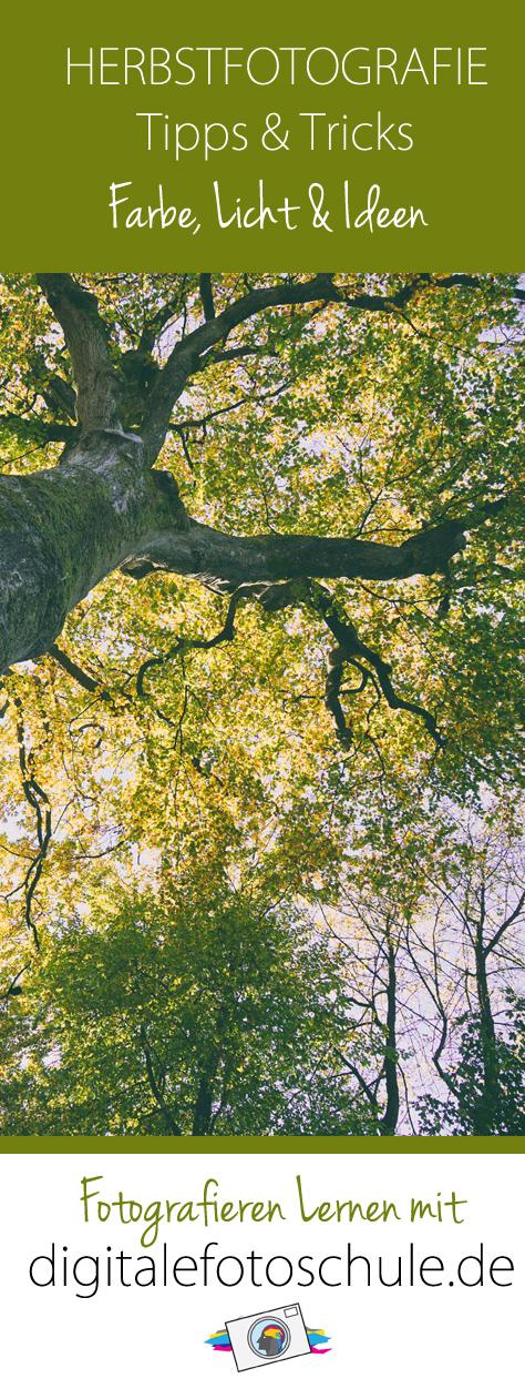 Herbstfotografie Tipps & Tricks